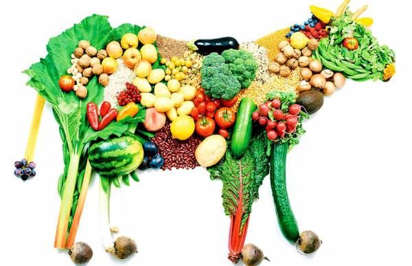 رژیم غذایی وگان در بخش نوزدهم